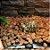 Placa Aquecida Aquecimento Para Repteis Gecko Corn Snake Jiboia - SEM DIMMER - Imagem 2