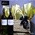 Cesta Polka com dois vinhos 750mL - Africa do Sul - Imagem 1