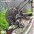 BICICLETA SL329 SX EAGLE 12V PRETO / VERMELHO NEON - Imagem 4