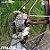 Bicicleta Road 3R5 Aero -  Sram Rival Disc Tam 52 - Imagem 4