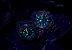 Relógio Seiko Prospex Sumo Padi Safira SSC795J1 / SBDL067 - Imagem 7