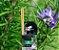 Aromatizador De Ambientes Alecrim 250ml - Imagem 1