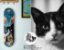 Skate Profissional Completo Shape Wood Light 8.0 Collab Iso Cat - Imagem 2