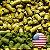 LUPULO US BREWER'S GOLD PELLET T-90 SAFRA 2018 - Imagem 1