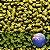 LÚPULO NZ STICKLEBRACT PELLET T-90 - Imagem 1