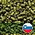 LÚPULO SL STYRIAN GOLDING PELLET T-90 - Imagem 1