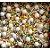 Sprinkles Circus 60g - Morello - Rizzo Confeitaria - Imagem 1