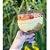 Taça Americana com Tampa 1,25ml 1un - Rizzo Confeitaria  - Imagem 1