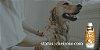 Shampoo Pet Clareador Dr. Dog 350ml com branqueador óptico - Imagem 2
