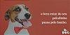 máscara de hidratação Pet Dr. Dog 500ml desmaio de fios  - Imagem 2