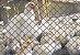 Rede de proteção para AVES - AVICULTURA (Granja) - Imagem 1