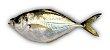 Peixe Palombeta Inteira KG - Imagem 1