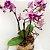 Orquídea Mini Phalaenópsis - Imagem 1