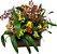 Mix de Orquídeas Chuva de ouro e chocolate - Imagem 1