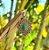 Pingente em Prata 925 e Malaquita - Imagem 1