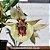 Catasetum Pileatum Brunai - Imagem 4