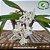 Rodriguezia Venusta - Imagem 2