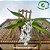 Rodriguezia Venusta - Imagem 3