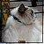 Coleira para gato - Super Star - Imagem 2