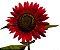 40 Sementes Da Flor Girassol Sol Vermelho - Imagem 1
