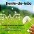 Dente De Leão 500mg : 120 Cápsulas - Imagem 1