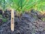 Escova De Dente Ecológica De Bambu Com Embalagem Eco - Imagem 5