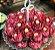 Forminha para Doces Finos - Bela Rose 40 unidades - Decora Doces - Rizzo Festas - Imagem 2