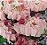 Forminha para Doces Finos - Rosa Maior Rosa Bebe 40 unidades - Decora Doces - Rizzo Festas - Imagem 2
