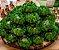 Forminha para Doces Finos - Rosa Maior Verde Limão Escuro 40 unidades - Decora Doces - Rizzo Festas - Imagem 2