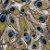 Saco Presente 20x29 - Pavão - 50 unidades - Regina - Rizzo Embalagens - Imagem 1