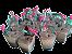 Laço Mosquitinho Rosa 50 Un para Colherinha de Brigadeiro Mole ou Lembrancinhas - Catelândia - Imagem 1