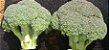 Sementes de Couve Brócoli Titanium (1MX) - Imagem 3
