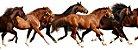 Scrubs Cavalo A Tropa - Imagem 2