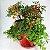 Vasos Empilháveis Para Terra e Hidropônicas Vermelho - Imagem 3