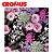 Saco de Presente CROMUS - IZA Perolado - Imagem 1