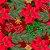Tecido Tricoline 100% Algodão Natal Digital - 079 - Imagem 1