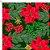 Tecido Tricoline 100% Algodão Natal Digital - 080 - Imagem 2