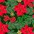 Tecido Tricoline 100% Algodão Natal Digital - 080 - Imagem 1