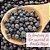 Óleo Essencial de Pimenta Negra - Imagem 2