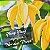 Óleo Essencial de Ylang Ylang Completo 5ml - Imagem 2