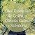 Óleo Essencial de Cedro - 10ml - Imagem 2