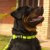 Coleira para cachorros Adventure - Imagem 2