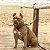 Guia Running para cachorros Honey - Imagem 4