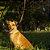 Guia para cachorro pequeno honey - Imagem 3