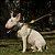 Guia para cachorro pequeno Outdoor - Imagem 4