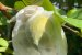 24 Saquinhos Para Proteger Frutas - Imagem 9