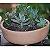 Vaso Grande Para Suculentas do Jardineiro Amador  - Imagem 2