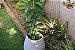 Kit para Plantar Frutas em Vasos - Imagem 9
