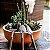 Caixa de Mini Ferramentas do Jardineiro Amador - Imagem 5