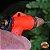 Esguicho Pistola de Jardinagem do Jardineiro Amador - Imagem 4